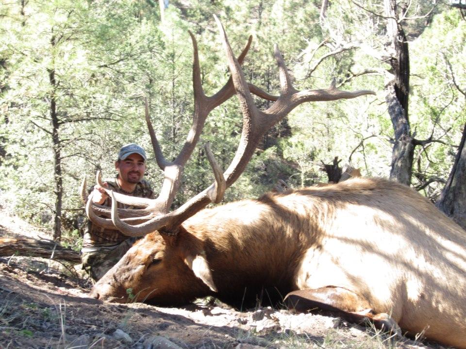 Giant Bull Elk or Bust