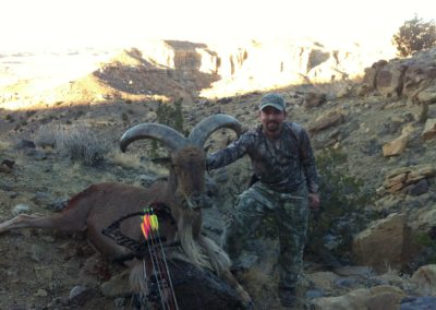 Barbary Sheep Archery