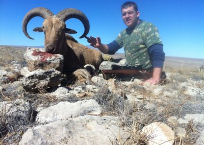 Barbary sheep 29 in